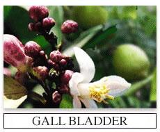 Gall Bladder Flush