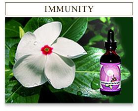 Immune Herbs